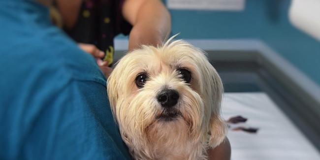 Assurance RC Pro pour vétérinaire : devis et tarif