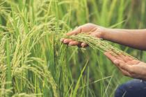 Mutuelle santé pour exploitant agricole : devis et tarif